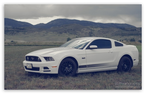 2013 Ford Mustang ❤ 4K UHD Wallpaper for Wide 16:10 5:3 Widescreen WHXGA WQXGA WUXGA WXGA WGA ; 4K UHD 16:9 Ultra High Definition 2160p 1440p 1080p 900p 720p ; UHD 16:9 2160p 1440p 1080p 900p 720p ; Standard 4:3 3:2 Fullscreen UXGA XGA SVGA DVGA HVGA HQVGA ( Apple PowerBook G4 iPhone 4 3G 3GS iPod Touch ) ; iPad 1/2/Mini ; Mobile 4:3 5:3 3:2 16:9 - UXGA XGA SVGA WGA DVGA HVGA HQVGA ( Apple PowerBook G4 iPhone 4 3G 3GS iPod Touch ) 2160p 1440p 1080p 900p 720p ; Dual 4:3 5:4 UXGA XGA SVGA QSXGA SXGA ;