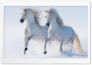 2 Horses HD Wide Wallpaper for Widescreen