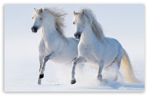 Download 2 Horses HD Wallpaper