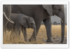 3 Elephants Family Ultra HD Wallpaper for 4K UHD Widescreen desktop, tablet & smartphone