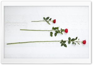 3 Three Red Roses HD Wide Wallpaper for Widescreen