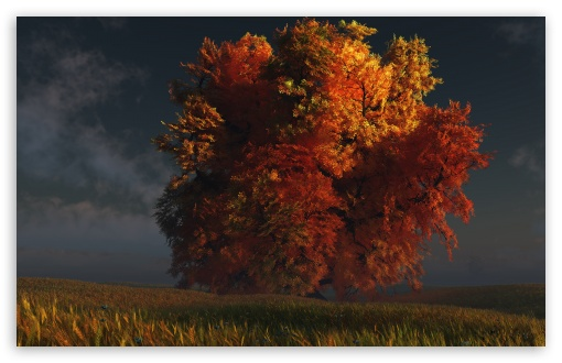 3D Autumn Tree HD wallpaper for Wide 16:10 5:3 Widescreen WHXGA WQXGA WUXGA WXGA WGA ; HD 16:9 High Definition WQHD QWXGA 1080p 900p 720p QHD nHD ; Standard 4:3 5:4 3:2 Fullscreen UXGA XGA SVGA QSXGA SXGA DVGA HVGA HQVGA devices ( Apple PowerBook G4 iPhone 4 3G 3GS iPod Touch ) ; Tablet 1:1 ; iPad 1/2/Mini ; Mobile 4:3 5:3 3:2 16:9 5:4 - UXGA XGA SVGA WGA DVGA HVGA HQVGA devices ( Apple PowerBook G4 iPhone 4 3G 3GS iPod Touch ) WQHD QWXGA 1080p 900p 720p QHD nHD QSXGA SXGA ;