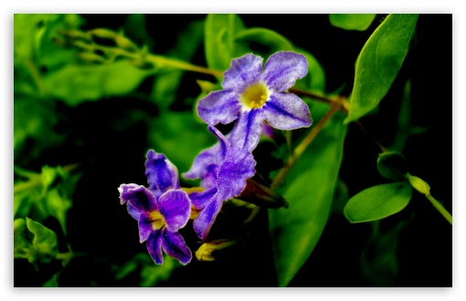 4 Purple Flowers HD wallpaper for Wide 16:10 5:3 Widescreen WHXGA WQXGA WUXGA WXGA WGA ; HD 16:9 High Definition WQHD QWXGA 1080p 900p 720p QHD nHD ; UHD 16:9 WQHD QWXGA 1080p 900p 720p QHD nHD ; Standard 4:3 5:4 3:2 Fullscreen UXGA XGA SVGA QSXGA SXGA DVGA HVGA HQVGA devices ( Apple PowerBook G4 iPhone 4 3G 3GS iPod Touch ) ; Tablet 1:1 ; iPad 1/2/Mini ; Mobile 4:3 5:3 3:2 16:9 5:4 - UXGA XGA SVGA WGA DVGA HVGA HQVGA devices ( Apple PowerBook G4 iPhone 4 3G 3GS iPod Touch ) WQHD QWXGA 1080p 900p 720p QHD nHD QSXGA SXGA ;