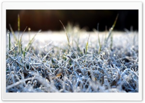 4K HD Frosted Grass Desktop HD Wide Wallpaper for Widescreen