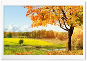 A Beautiful View Of Colorful Autumn Trees HD Wide Wallpaper for Widescreen
