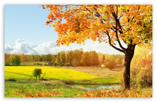 A Beautiful View Of Colorful Autumn Trees HD wallpaper for Wide 16:10 5:3 Widescreen WHXGA WQXGA WUXGA WXGA WGA ; HD 16:9 High Definition WQHD QWXGA 1080p 900p 720p QHD nHD ; Standard 4:3 5:4 3:2 Fullscreen UXGA XGA SVGA QSXGA SXGA DVGA HVGA HQVGA devices ( Apple PowerBook G4 iPhone 4 3G 3GS iPod Touch ) ; Tablet 1:1 ; iPad 1/2/Mini ; Mobile 4:3 5:3 3:2 16:9 5:4 - UXGA XGA SVGA WGA DVGA HVGA HQVGA devices ( Apple PowerBook G4 iPhone 4 3G 3GS iPod Touch ) WQHD QWXGA 1080p 900p 720p QHD nHD QSXGA SXGA ;