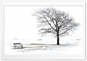 A Bench And A Tree HD Wide Wallpaper for Widescreen