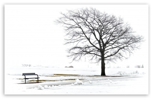 A Bench And A Tree HD wallpaper for Wide 16:10 5:3 Widescreen WHXGA WQXGA WUXGA WXGA WGA ; HD 16:9 High Definition WQHD QWXGA 1080p 900p 720p QHD nHD ; Standard 4:3 5:4 3:2 Fullscreen UXGA XGA SVGA QSXGA SXGA DVGA HVGA HQVGA devices ( Apple PowerBook G4 iPhone 4 3G 3GS iPod Touch ) ; Tablet 1:1 ; iPad 1/2/Mini ; Mobile 4:3 5:3 3:2 16:9 5:4 - UXGA XGA SVGA WGA DVGA HVGA HQVGA devices ( Apple PowerBook G4 iPhone 4 3G 3GS iPod Touch ) WQHD QWXGA 1080p 900p 720p QHD nHD QSXGA SXGA ;
