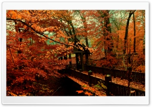 A Bridge to Autumn HD Wide Wallpaper for 4K UHD Widescreen desktop & smartphone