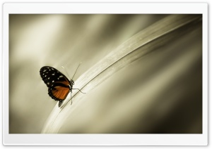 A Butterfly Perched on a Leaf HD Wide Wallpaper for Widescreen