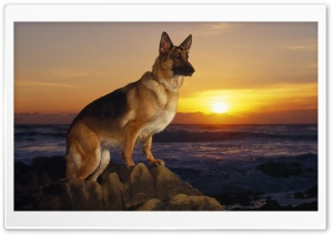 A Day At The Beach German Shepherd HD Wide Wallpaper for 4K UHD Widescreen desktop & smartphone