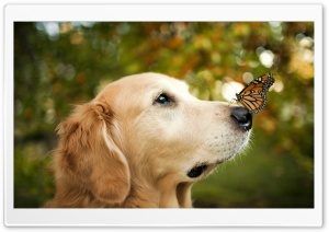 A Dog and A Butterfly HD Wide Wallpaper for 4K UHD Widescreen desktop & smartphone