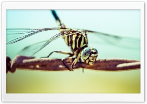 A Dragonfly HD Wide Wallpaper for Widescreen