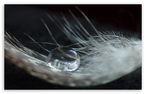 A Drop On A Feather HD wallpaper for Standard 4:3 5:4 Fullscreen UXGA XGA SVGA QSXGA SXGA ; Wide 16:10 5:3 Widescreen WHXGA WQXGA WUXGA WXGA WGA ; HD 16:9 High Definition WQHD QWXGA 1080p 900p 720p QHD nHD ; Other 3:2 DVGA HVGA HQVGA devices ( Apple PowerBook G4 iPhone 4 3G 3GS iPod Touch ) ; Mobile VGA WVGA iPhone iPad PSP Phone - VGA QVGA Smartphone ( PocketPC GPS iPod Zune BlackBerry HTC Samsung LG Nokia Eten Asus ) WVGA WQVGA Smartphone ( HTC Samsung Sony Ericsson LG Vertu MIO ) HVGA Smartphone ( Apple iPhone iPod BlackBerry HTC Samsung Nokia ) Sony PSP Zune HD Zen ; Tablet 2 Android ; Dual 4:3 5:4 16:10 5:3 16:9 UXGA XGA SVGA QSXGA SXGA WHXGA WQXGA WUXGA WXGA WGA WQHD QWXGA 1080p 900p 720p QHD nHD ;