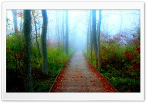 A Fall Adventure In The Wisconsin Woods HD Wide Wallpaper for Widescreen