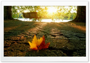 A Fallen Leaf In The Park HD Wide Wallpaper for 4K UHD Widescreen desktop & smartphone