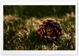 A Fallen Pine Cone HD Wide Wallpaper for Widescreen