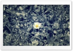 A Flower HD Wide Wallpaper for Widescreen