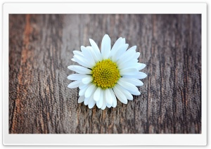 A Flower on a Wooden Table HD Wide Wallpaper for Widescreen