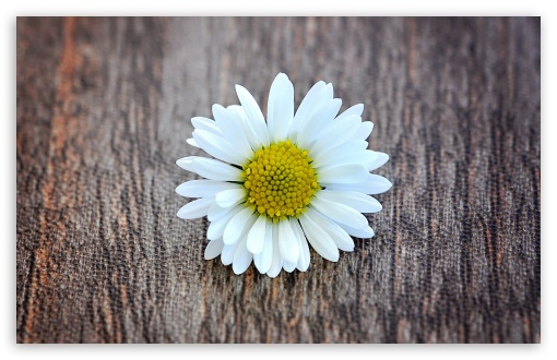 A Flower on a Wooden Table ❤ 4K UHD Wallpaper for Wide 16:10 5:3 Widescreen WHXGA WQXGA WUXGA WXGA WGA ; 4K UHD 16:9 Ultra High Definition 2160p 1440p 1080p 900p 720p ; Standard 4:3 5:4 3:2 Fullscreen UXGA XGA SVGA QSXGA SXGA DVGA HVGA HQVGA ( Apple PowerBook G4 iPhone 4 3G 3GS iPod Touch ) ; Smartphone 5:3 WGA ; Tablet 1:1 ; iPad 1/2/Mini ; Mobile 4:3 5:3 3:2 16:9 5:4 - UXGA XGA SVGA WGA DVGA HVGA HQVGA ( Apple PowerBook G4 iPhone 4 3G 3GS iPod Touch ) 2160p 1440p 1080p 900p 720p QSXGA SXGA ; Dual 16:10 5:3 16:9 4:3 5:4 WHXGA WQXGA WUXGA WXGA WGA 2160p 1440p 1080p 900p 720p UXGA XGA SVGA QSXGA SXGA ;
