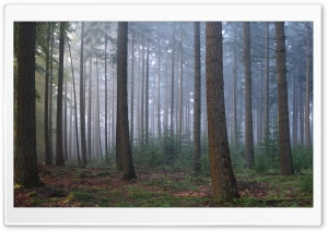 A Forest HD Wide Wallpaper for Widescreen