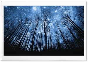 A Forest Of Stars HD Wide Wallpaper for 4K UHD Widescreen desktop & smartphone