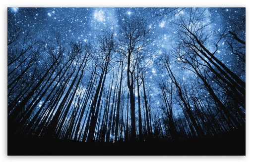 A Forest Of Stars ❤ 4K UHD Wallpaper for Wide 16:10 5:3 Widescreen WHXGA WQXGA WUXGA WXGA WGA ; 4K UHD 16:9 Ultra High Definition 2160p 1440p 1080p 900p 720p ; Mobile 5:3 16:9 - WGA 2160p 1440p 1080p 900p 720p ;