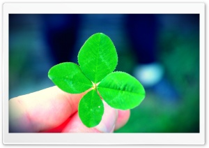 A Four-leaf Clover HD Wide Wallpaper for 4K UHD Widescreen desktop & smartphone