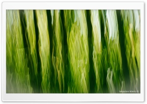 A Green Touch HD Wide Wallpaper for Widescreen
