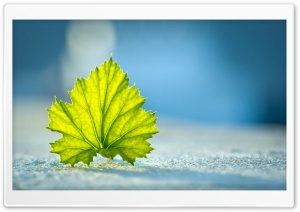 A Leaf On the Ground HD Wide Wallpaper for Widescreen