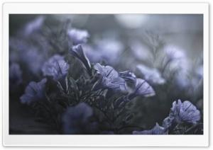 A Midsummer Nights Flowers Ultra HD Wallpaper for 4K UHD Widescreen desktop, tablet & smartphone
