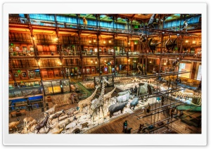 A Night At The Museum HD Wide Wallpaper for Widescreen