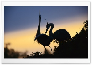 A Pair Of Cranes HD Wide Wallpaper for Widescreen
