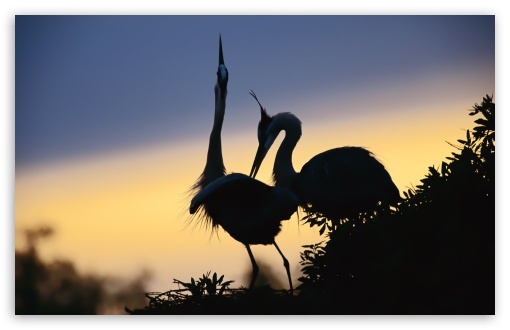A Pair Of Cranes ❤ 4K UHD Wallpaper for Wide 16:10 5:3 Widescreen WHXGA WQXGA WUXGA WXGA WGA ; 4K UHD 16:9 Ultra High Definition 2160p 1440p 1080p 900p 720p ; Standard 4:3 5:4 3:2 Fullscreen UXGA XGA SVGA QSXGA SXGA DVGA HVGA HQVGA ( Apple PowerBook G4 iPhone 4 3G 3GS iPod Touch ) ; Tablet 1:1 ; iPad 1/2/Mini ; Mobile 4:3 5:3 3:2 16:9 5:4 - UXGA XGA SVGA WGA DVGA HVGA HQVGA ( Apple PowerBook G4 iPhone 4 3G 3GS iPod Touch ) 2160p 1440p 1080p 900p 720p QSXGA SXGA ;