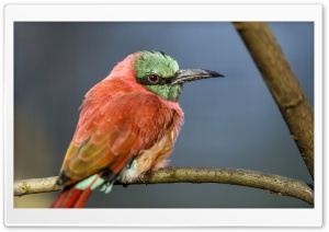 A Perched Bee Eater HD Wide Wallpaper for Widescreen