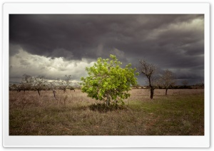 A Single Green Tree Surrounded by Dead Trees HD Wide Wallpaper for Widescreen