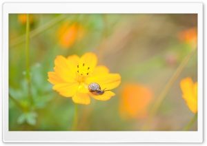 A Snail On A Flower HD Wide Wallpaper for Widescreen