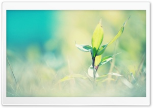 A Spring Afternoon HD Wide Wallpaper for Widescreen
