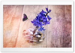 A Spring Hyacinth Flower In Glass Vase HD Wide Wallpaper for Widescreen