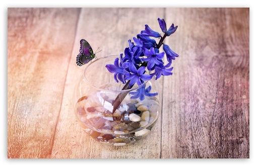 A Spring Hyacinth Flower In Glass Vase ❤ 4K UHD Wallpaper for Wide 16:10 5:3 Widescreen WHXGA WQXGA WUXGA WXGA WGA ; 4K UHD 16:9 Ultra High Definition 2160p 1440p 1080p 900p 720p ; Standard 4:3 5:4 3:2 Fullscreen UXGA XGA SVGA QSXGA SXGA DVGA HVGA HQVGA ( Apple PowerBook G4 iPhone 4 3G 3GS iPod Touch ) ; Tablet 1:1 ; iPad 1/2/Mini ; Mobile 4:3 5:3 3:2 16:9 5:4 - UXGA XGA SVGA WGA DVGA HVGA HQVGA ( Apple PowerBook G4 iPhone 4 3G 3GS iPod Touch ) 2160p 1440p 1080p 900p 720p QSXGA SXGA ;