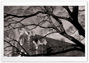 A Tree Near Church HD Wide Wallpaper for 4K UHD Widescreen desktop & smartphone