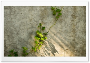A Vine HD Wide Wallpaper for Widescreen