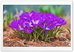 A Worms Eye View of Spring HD Wide Wallpaper for Widescreen