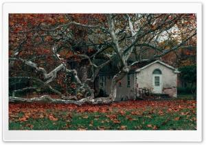 Abandoned House, Autumn Ultra HD Wallpaper for 4K UHD Widescreen desktop, tablet & smartphone
