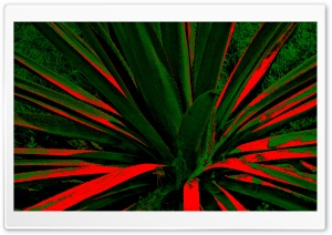 Abstract Cactus HD Wide Wallpaper for Widescreen