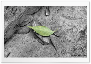 Accented Leaf HD Wide Wallpaper for Widescreen