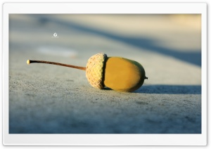 Acorn HD Wide Wallpaper for Widescreen