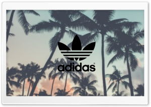 Adidas, Palm Trees Background HD Wide Wallpaper for 4K UHD Widescreen desktop & smartphone