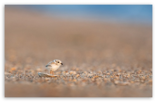 adorable baby gull bird wallpapers
