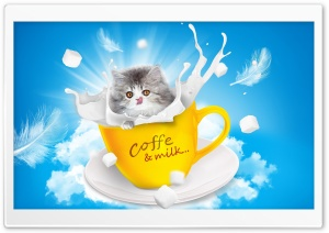 Adorable Kitten HD Wide Wallpaper for Widescreen